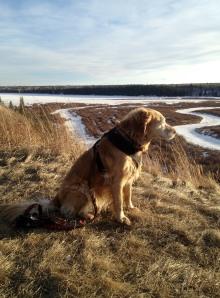 Ellie contemplating the leap